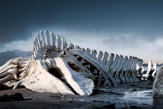 Газета, выпускаемая РПЦ, рассказала о существовании динозавров во времена Христа