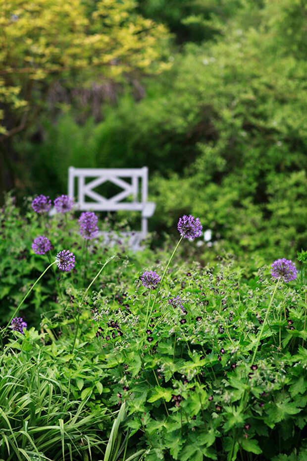 Резкость там, где я хотела ее оставить - на соцветиях лука, остальное заполняет кадр, давая представление об окружении.