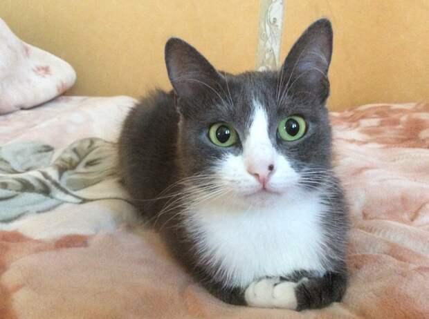 Кошки, такие кошки благодарность, кошки