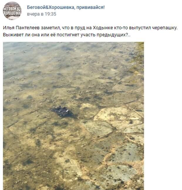 Фото дня: черепаха поселилась в Ходынском пруду