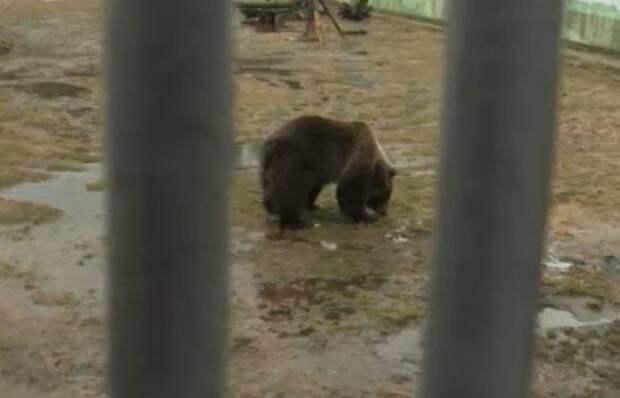 В Ярославском зоопарке сегодня проснулись медведи