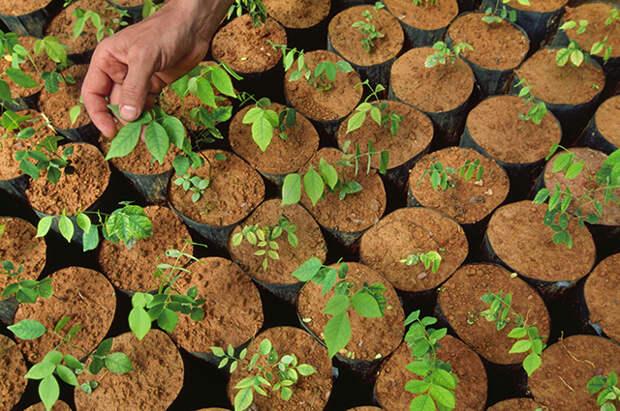 Вырастет ли из покупных семян то, что изображено на пакетике?