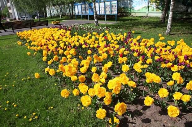 Вдоль Алтуфьевского шоссе станет больше цветников