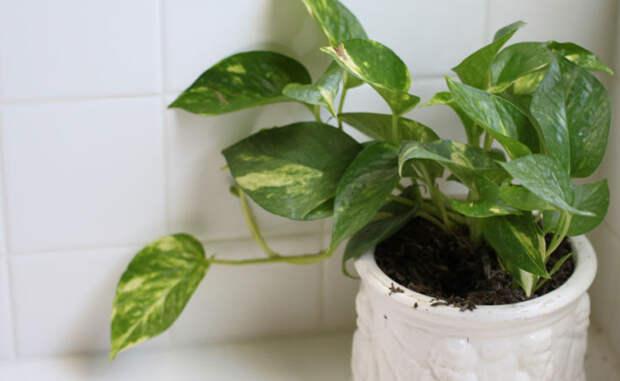 Выращиваем домашний сад в обычной квартире на подоконнике