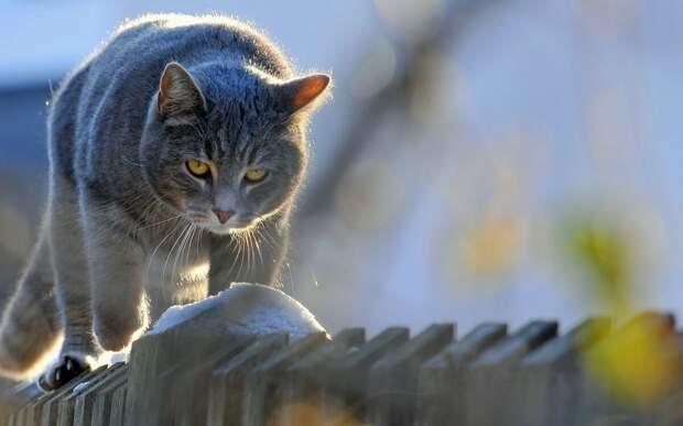 Перевоспитание кота