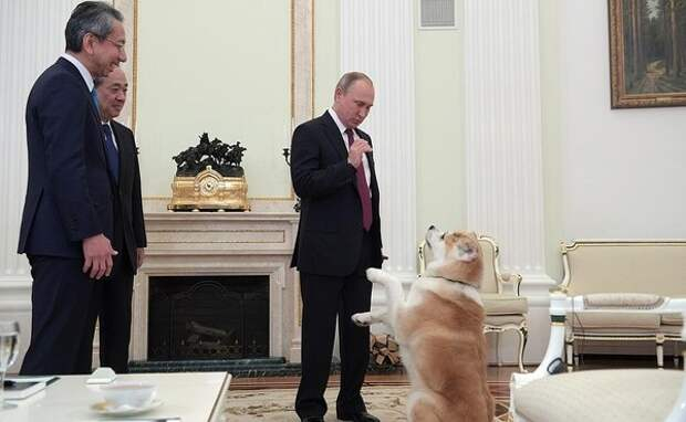Царь зверей президент, путин, собака, япония