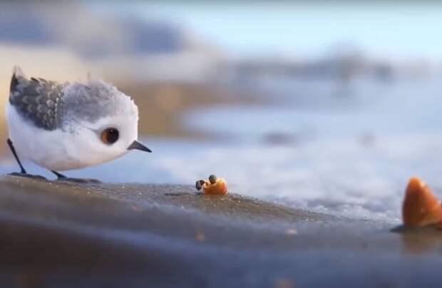 Короткий мультфильм: Disney и Pixar вдохновились жизнью куликов и показали ее детям