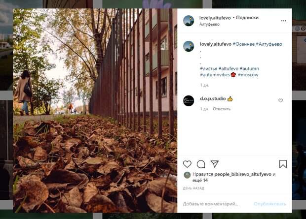 Осенний ковер из листьев в Алтуфьеве