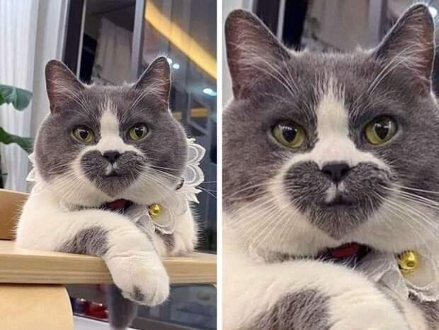 Кошки, раскрашенные природой не по правилам