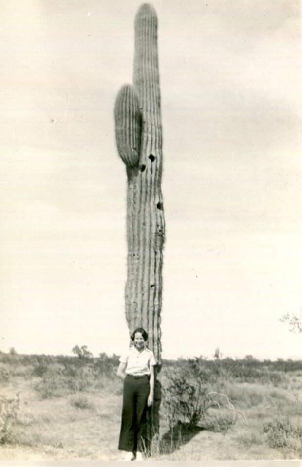 Экзотическое растение больших размеров.