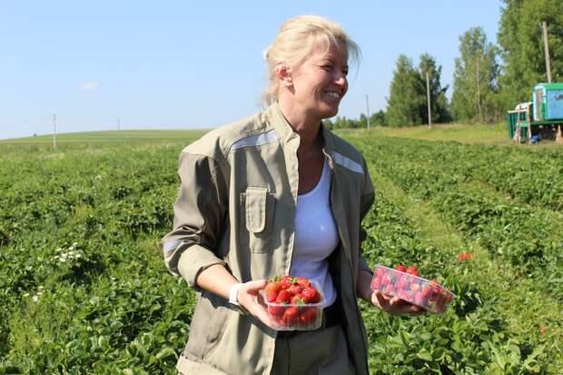 В Удмуртии планируют круглый год выращивать клубнику