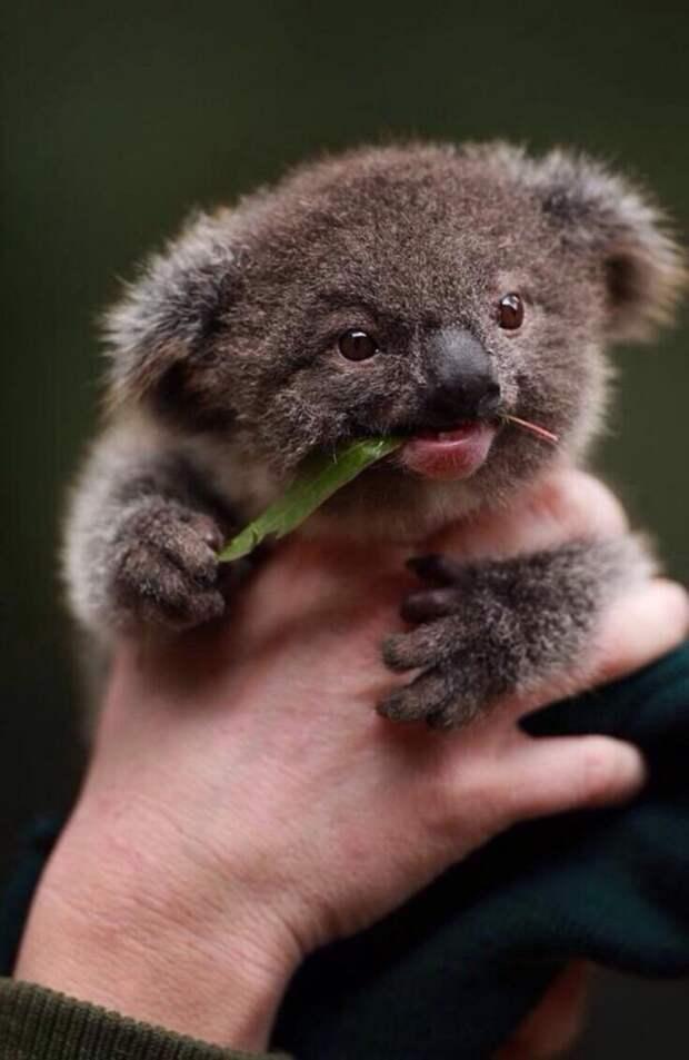 16 очаровательных зверенышей, на которых вам срочно нужно посмотреть