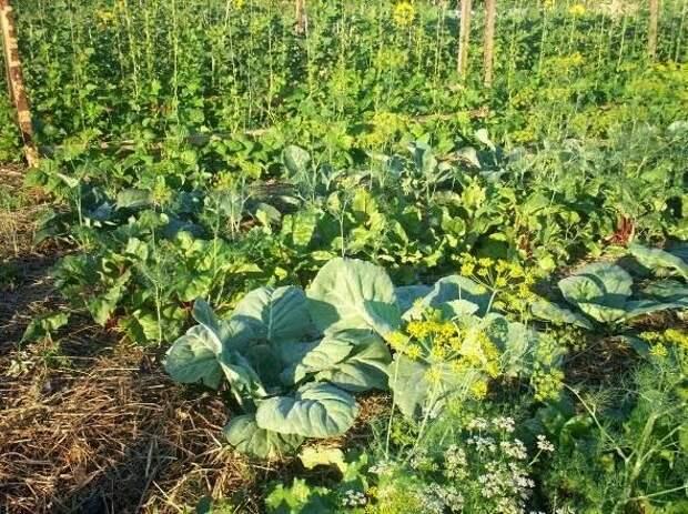 Безпахотное земледелие — основа земледелия древней Руси до Романовых