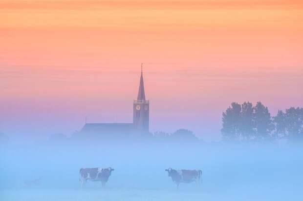 Весенняя красота Нидерландов в фотографиях Альберта Дроса