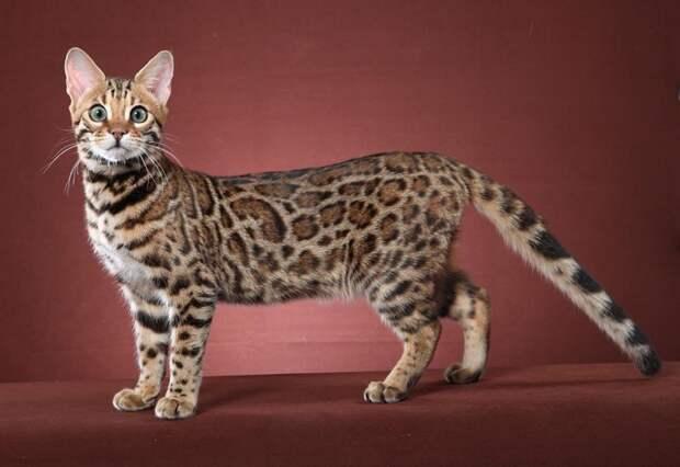 ТЕРЕМОК. Такие разные кошки