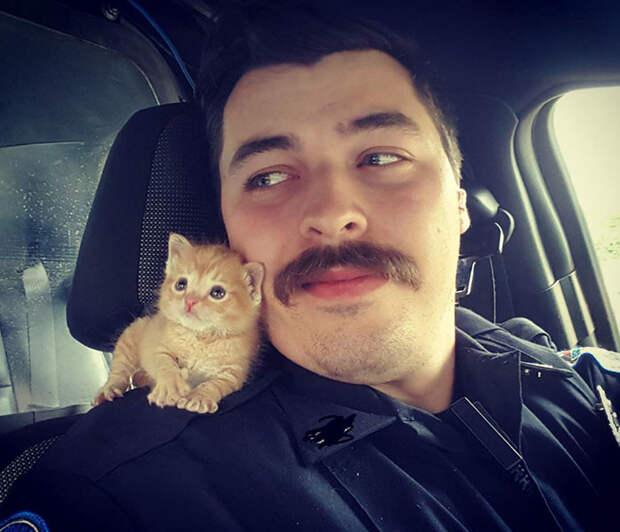 Полицейский спас котенка, выброшенного под дождь. Теперь они вместе охотятся на преступников Счастливый конец, животные, спасение