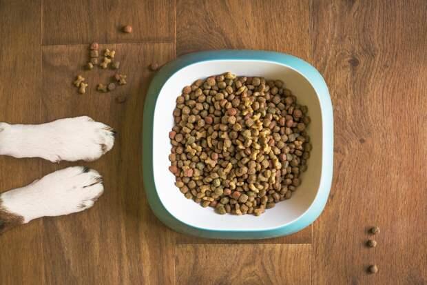 Как дать собаке таблетку: советы хозяевам