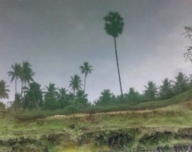 Пейзаж с переворотом