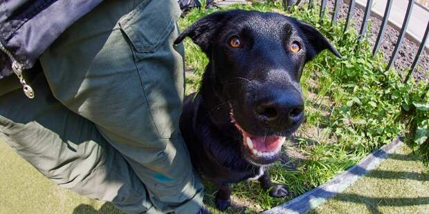 Бесценный жизненный опыт: кинологи — о том, как они учат собак спасать людей