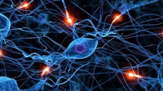 Ученые обнаружили механизм передачи памяти между организмами