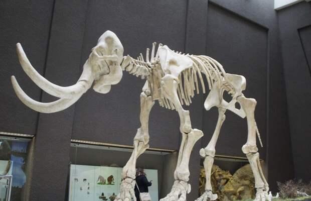 Кости мамонта откопали в центре Уфы