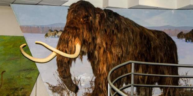 Власти Якутии планируют заселить тундру клонированными мамонтами
