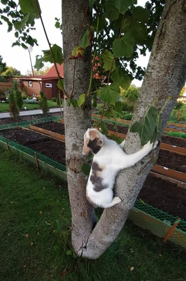 Скоро она не сможет играть осенними листиками. Помогите, пока есть кого спасать...