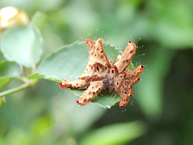 caterpillar-moth-butterfly-before-after-metamorphosis-2-1