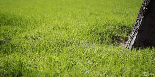 На Коптевской улице житель требует покосить траву вопреки желаниям соседей