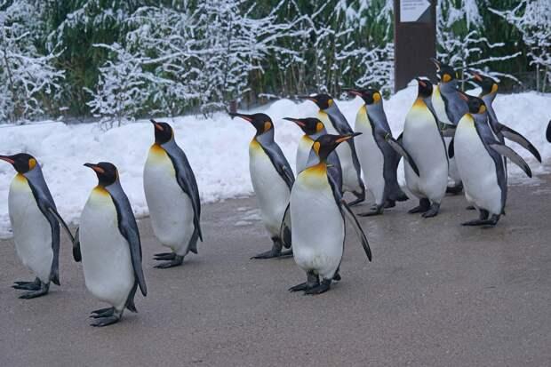 Пингвинов в Московском зоопарке развлекли мыльными пузырями