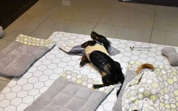 Фотографии спящих щенков в детском саду для собак покорили интернет