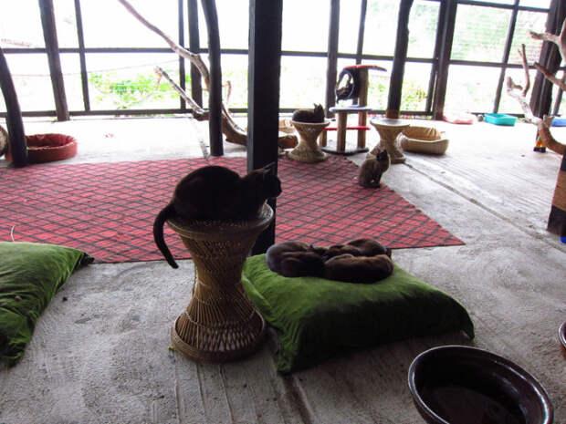 Бирманские кошки в Инле. | Фото: flickr.com.