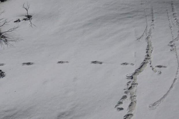 Индийские военные нашли следы Снежного Человека