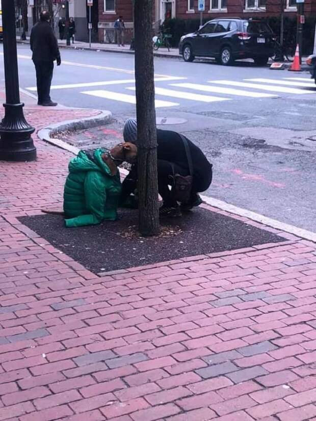 Оставив на время питомца у дерева, женщина решила согреть его своей курткой