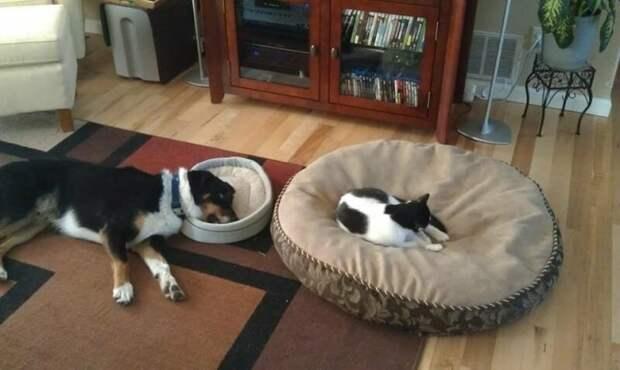 19 доказательств того, что кошки - главные хозяева в доме Кошка в доме, домашние животные, забавные фото с котами., кошка, кошки, фото кошек, хозяева животные, юмор