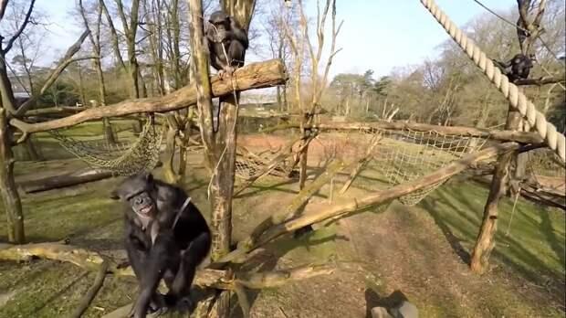 Видео: Моменты гениальности животных, которые потрясают