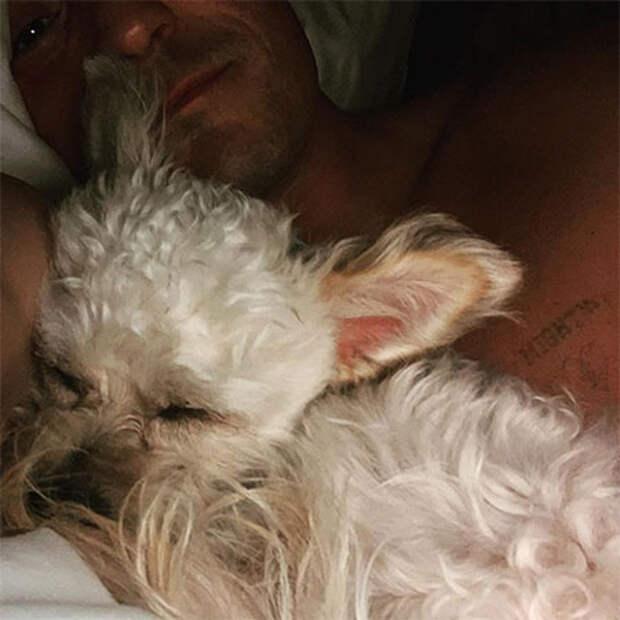 Орландо Блум взял из приюта собаку после гибели любимого пса Майти: фото
