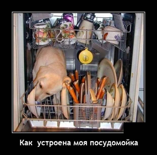Демотиватор про посудомойку