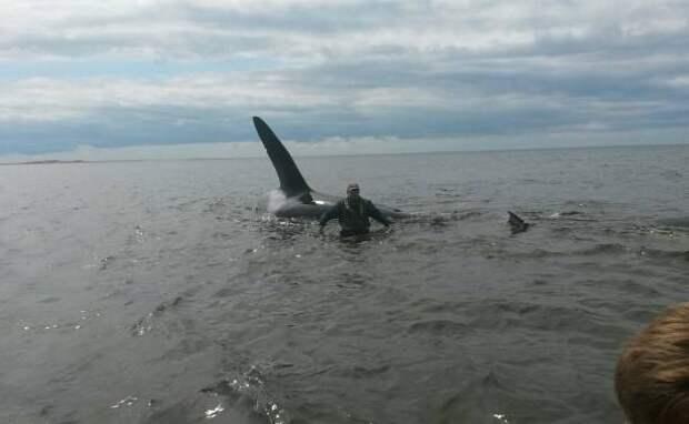Жители Сахалина спасли двух косаток, застрявших на мелководье