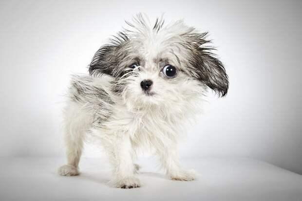 Фотохудожник помогает собакам-инвалидам найти новых хозяев