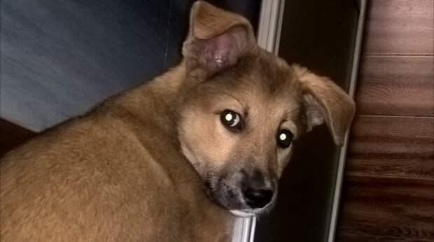 Девушка приютила двухмесячную собачку, но кроха невзлюбила свою хозяйку. За любовь питомицы пришлось побороться