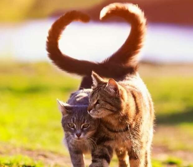 Способны ли кошки на любовь