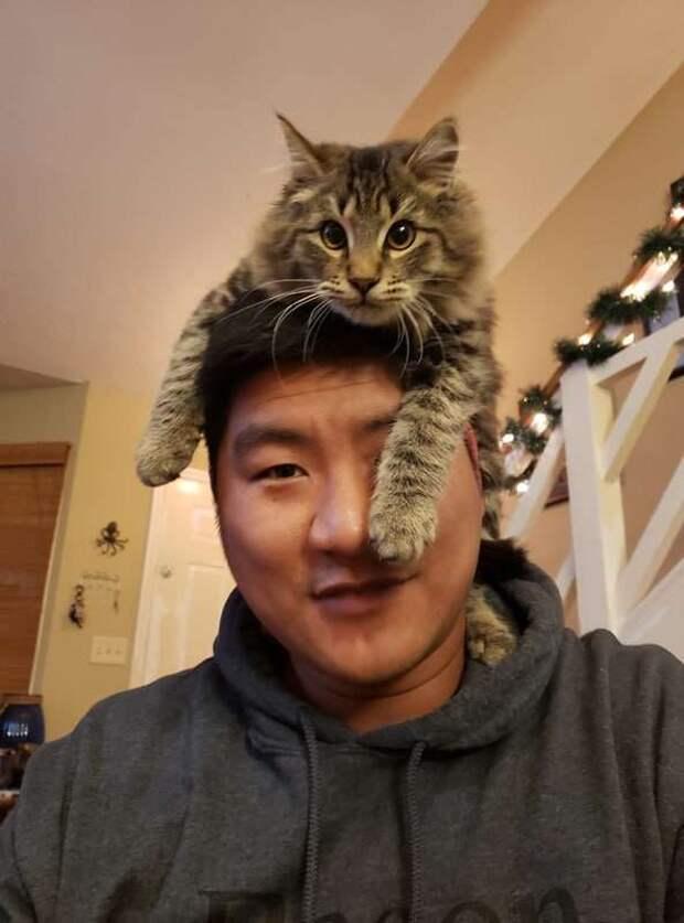 Кот буквально сидит на голове у хозяев, но те не в обиде, потому что знают причину его действий