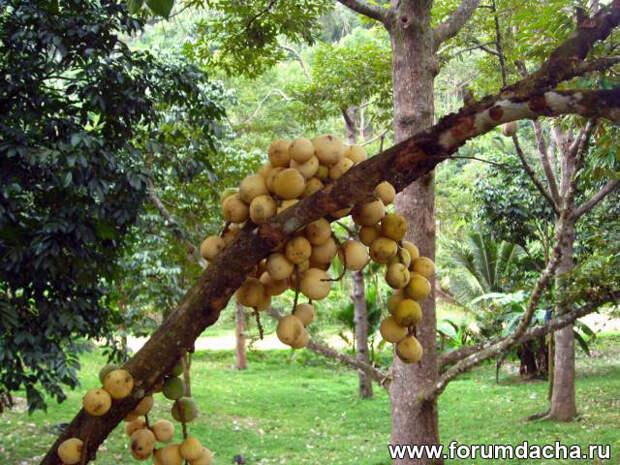 Экзотические фрукты ЮВА