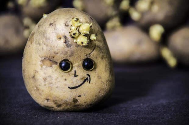 Выращивать картофель нужно так, чтобы урожайность была высокой, и клубней хватало на весь год