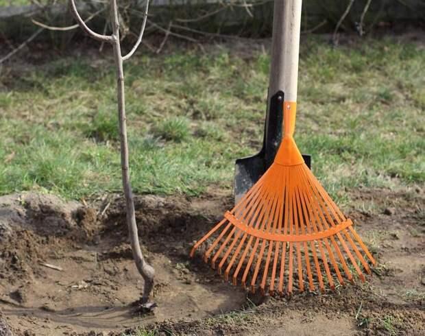 Посадить дерево весной
