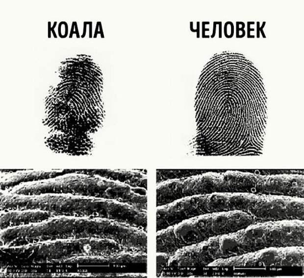 Отпечатки пальцев Криминалистика, адвокатские истории, интересные факты