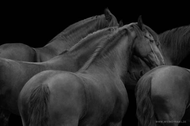 Черный животные, искусство, лошади, фотография