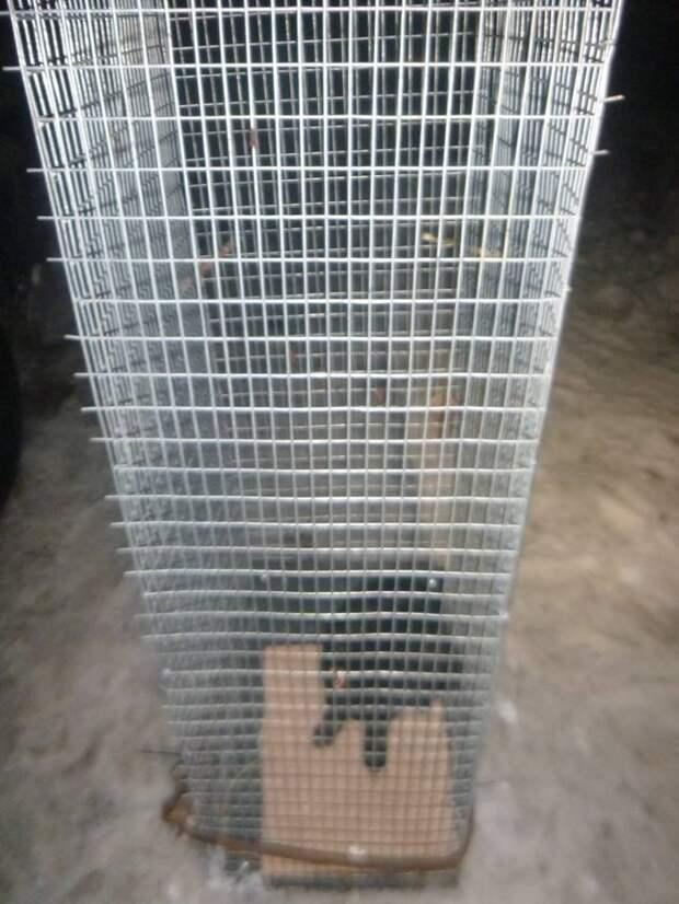 6 дней на спасение! В Киеве котёнок почти неделю блуждал по лабиринту теплотрассы, но спасатели не теряли надежды!