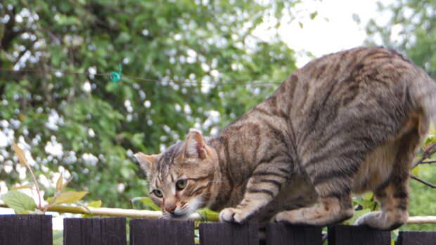 Жительница Ленинградской области написала заявление на соседского кота